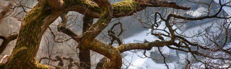E greu sa ajungi din copac, pasare